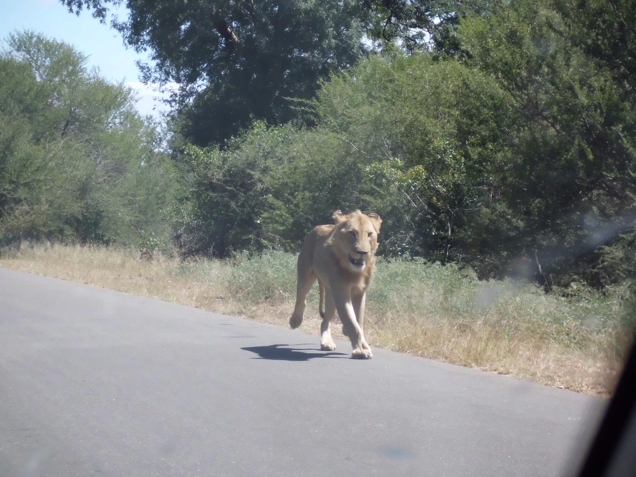 Circuit Aventura in Africa de Sud si Zambia