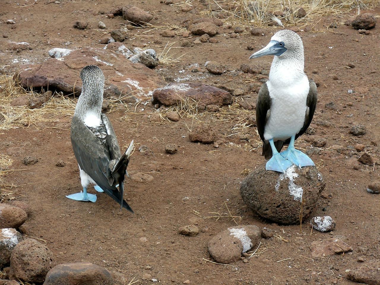 Circuit Columbia - Ecuador - Galapagos